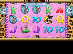 Meow Money slotmachines77.com Nektan 1/5